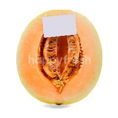 UM Sunlady Melon