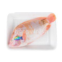บิ๊กซี ปลาทับทิมปลอดสาร