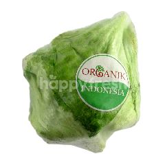 Ranch Organic 99 Selada Iceberg Organik