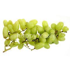 Stella Bella Green Seedless Grapes