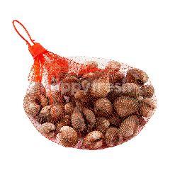 กูร์เมต์ มาร์เก็ต หอยแครงจัมโบ้