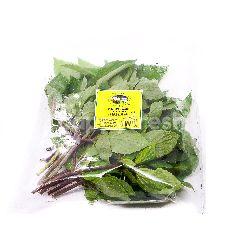 Genting Garden Thai Basil (Premium Quality)