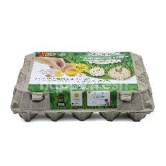 A1 KING Antibiotic Free Green Eggs