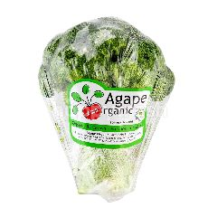 AGAPE ORGANIC Organic Broccoli
