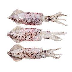 White Squid (L)