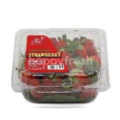 Cameron Garden Strawberry