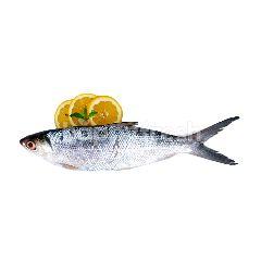 Ikan Bandeng Super